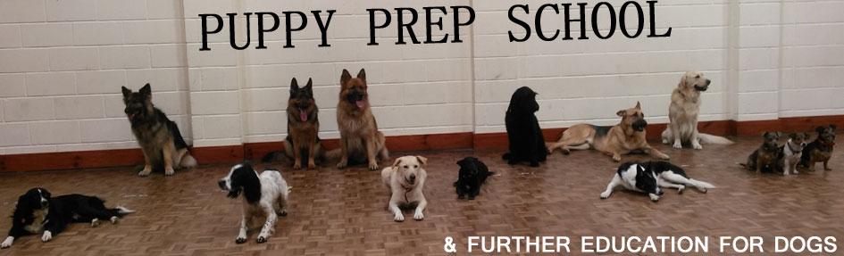 Puppy Prep School